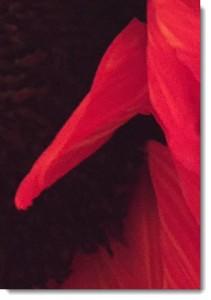 petals3