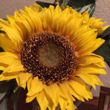 sflower