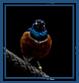 net2Bird