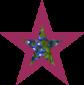 fistulaStar2